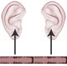 Ear Levels